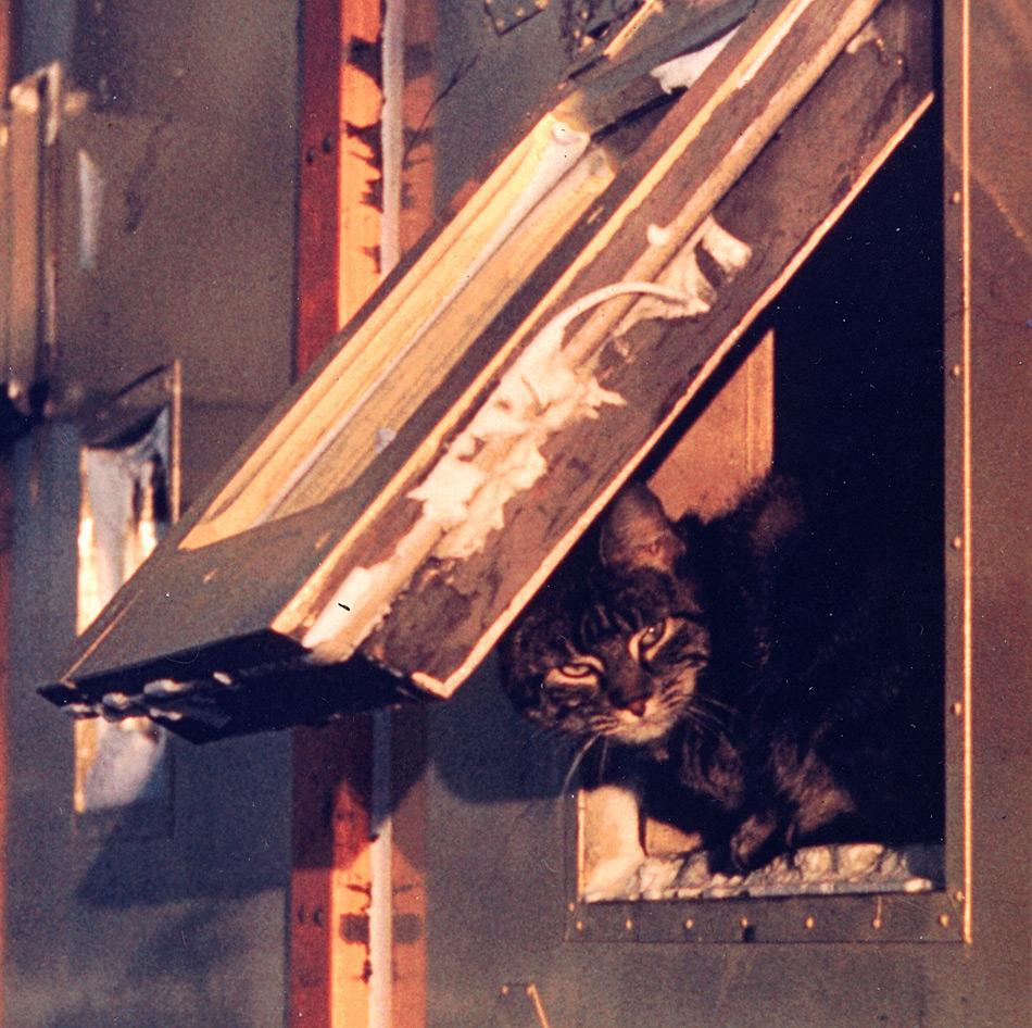 Iggy die Scott Base Katze. Als ein kleines Kätzchen war sie in der Tasche eines amerikanischen Soldaten in die Antarktis geflogen, durfte aber nicht auf den US-Marinestützpunkt. Ihr Retter war der neuseeländische Stationskoch Morrie Speary, der sie zur Scott Base mitnahm, wo Iggy fortan die meiste Zeit in der Küche verbrachte. Am Ende des nächsten Sommers flog Iggy zurück nach Christchurch und bekam eine Leine. Aber nachdem sie zum ersten Mal Gras, Bäumen und Vögeln sah, lief sie davon und wurde nie wieder gesehen. (Ein Auszug aus