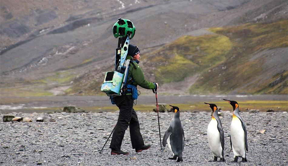 Wie von einem anderen Stern, da staunen selbst die Pinguine.