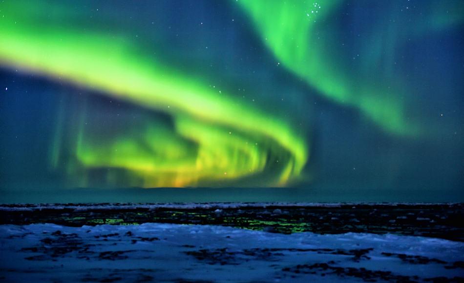 Beuteltiere sind in der Arktis keine zu finden. Doch vor 69 Millionen Jahren lagen die Temperaturen höher und die arktischen Regionen waren etwas milder als heute. Trotzdem machten Dunkelheit und vielleicht sogar Schnee den wechselwarmen Reptilien zu schaffen. Bild: Michael Wenger